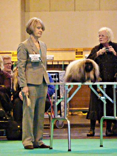 stripe crufts2.jpg